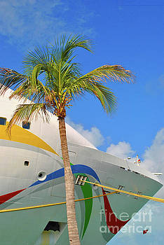 Palm Cruise by Jost Houk