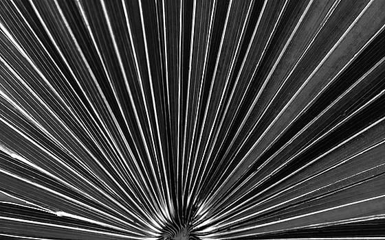 Palm Fan by Robert Mitchell