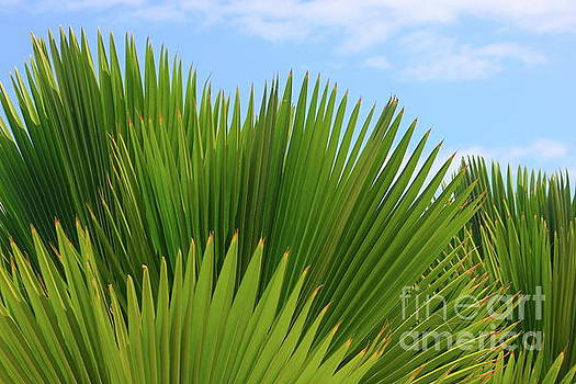 Palm Fans by The Art of Alice Terrill