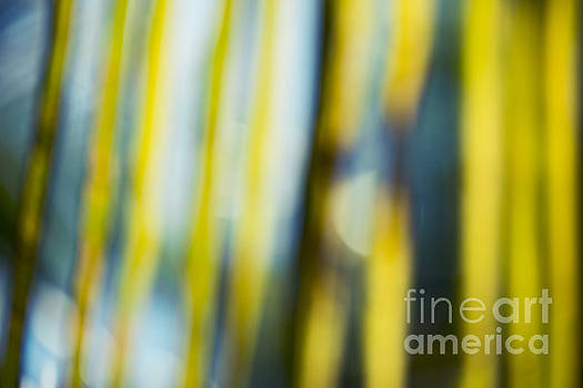 Palm Frond Abstract Jewel Tones by Sharon Mau