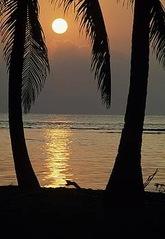 Don Kreuter - Palm Fronds and Sunset over Caribbean