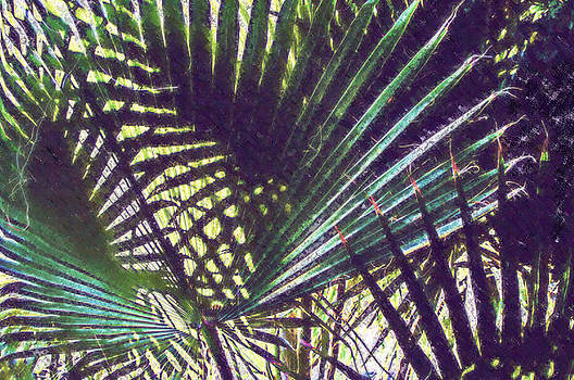 Robert Bissett - Palm Fronds