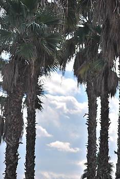 Palm by Jessica Saenz