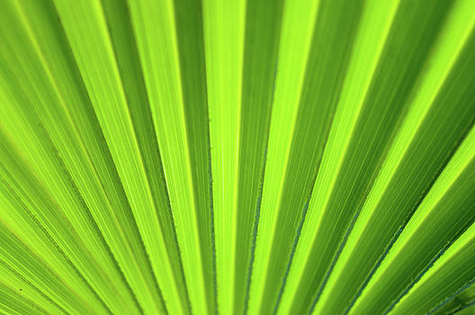 Palm Leaf Abstract by Denise Bird