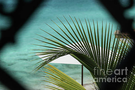Palm leaves view with frame by Miro Vrlik
