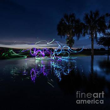 Palm Lights by Brian Jones