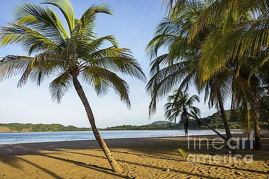 Oscar Gutierrez - Palm Lined Beach