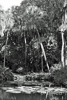 Jost Houk - Palm of the Swamp
