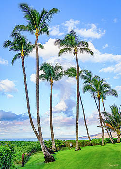 Palm Paradise by Greg Mitchell Photography