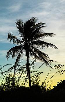 Palm Silhouette by Alida Thorpe