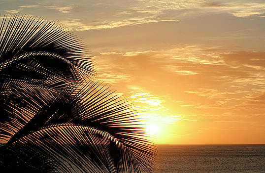 Palm Sunset 2 by Vicki Hone Smith