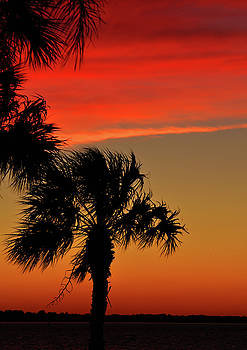 Palm Sunset by Peter  McIntosh