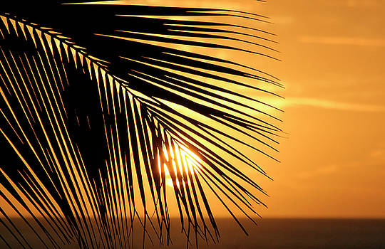 Palm Sunset by Vicki Hone Smith