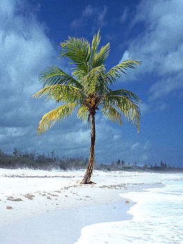 Palm Tee In The Sand by Richard Nickson