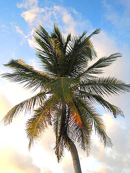 Palm Tree at Akumal Sur 1 by Christopher Spicer