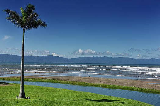 Reimar Gaertner - Palm tree at beach of Nuevo Vallarta resort on Banderas Bay with