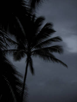 Jonathan Hansen - Palm Tree at Night