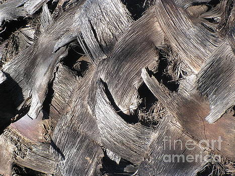 Palm Tree Bark by Karen Sydney