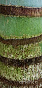Charmian Vistaunet - Palm Tree Bark Texture