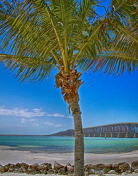 Palm Tree Bridge and Sand by Paula Porterfield-Izzo