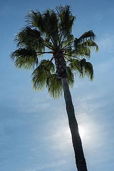 Palm Tree California by Steve Gadomski