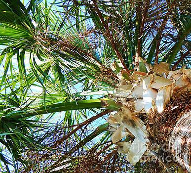 Palm Tree Canopy by John Eide