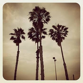 Palm Tree Heaven by Ann Marie Donahue
