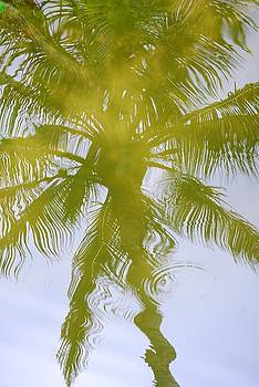 Palm Tree in Water by Peter  McIntosh