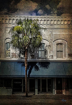 Palm Tree by Jim Ziemer