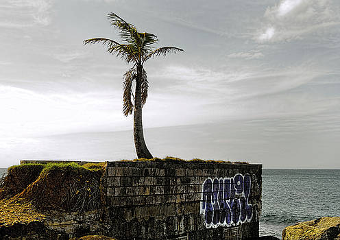 Palm Tree by Kevin Duke