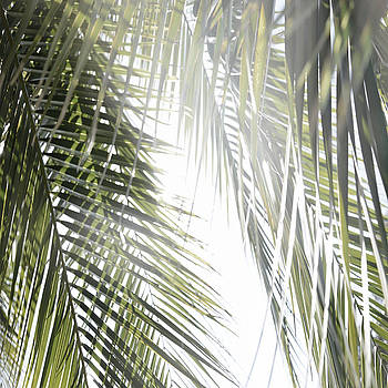 Palm Tree Leaves by Emma Lucas