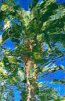 Palm Tree Reflection by Glennis Siverson