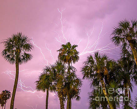 Palm Tree Shocker by Stephen Whalen