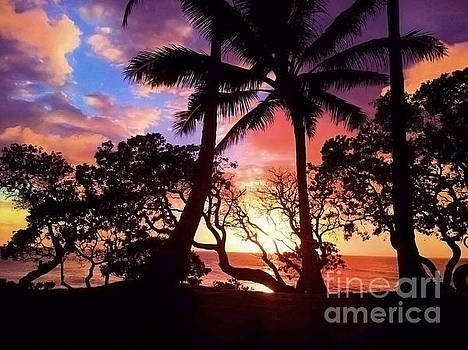 Palm Tree Silhouette by Kristine Merc