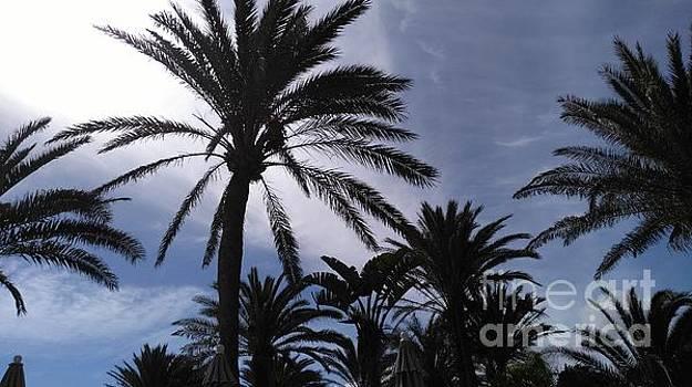 Palm Tree Sky by Mike O'Hagan