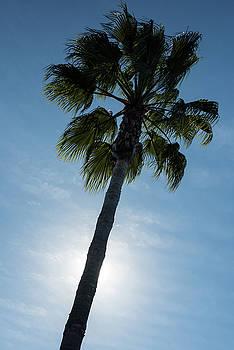 Palm Tree by Steve Gadomski
