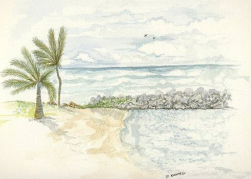 Palm Tree study eight by Darren Cannell