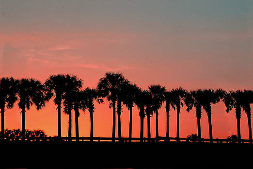 Palm Tree Sunset by Joel Witmeyer