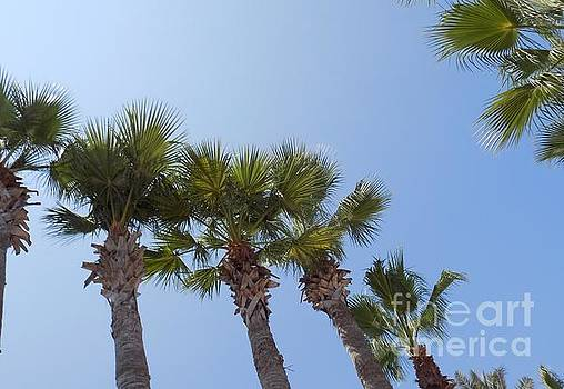 Palm Tree Tops by Mike O'Hagan