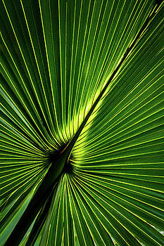 Palm Tree with Back-light by Robert Mitchell