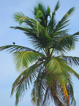 Palm Tree with Bird by Christopher Spicer