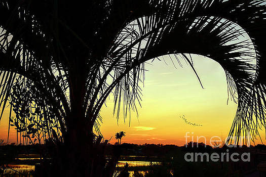 Palm Trees And Sunset by Kathy Baccari