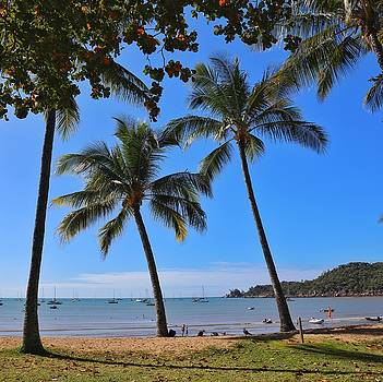 Palm trees at Horseshoe Bay on Magnetic Island by Keiran Lusk