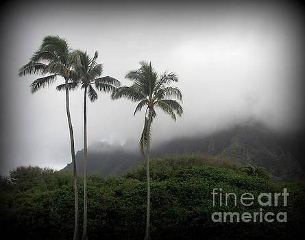 Palm Trees at Kualoa Park Oahu by Joy Patzner