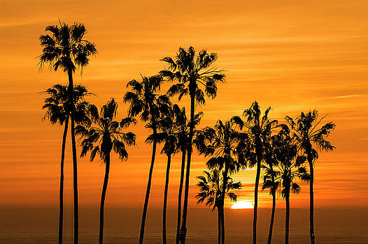 Randall Nyhof - Palm Trees at Sunset by Cabrillo Beach