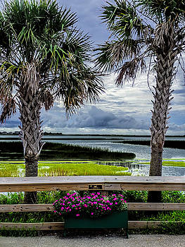 Palm Trees at the Marsh by Terry Shoemaker