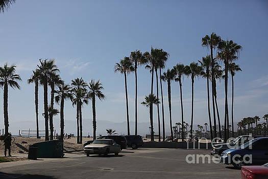 Chuck Kuhn - Palm Trees California