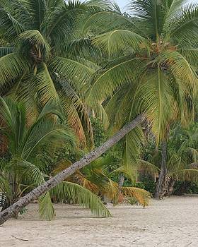 Palm trees by Carla Neufeld