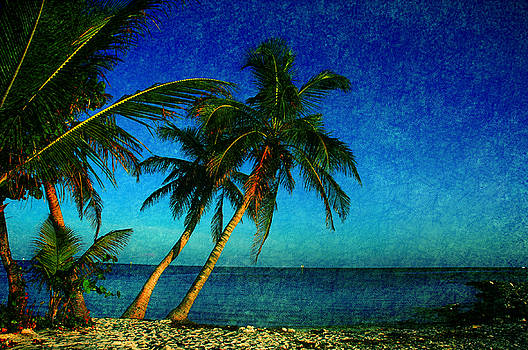 Susanne Van Hulst - Palm trees in Key West