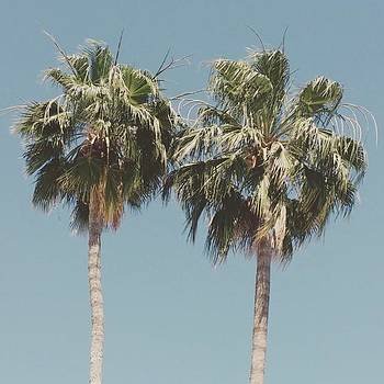 Palm Trees In #phoenix! #summertime by Sarah Marie
